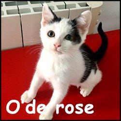 O'de rose