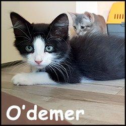 O'demer