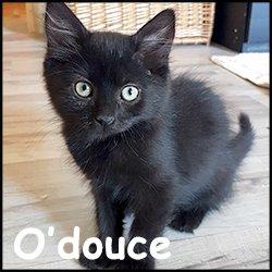 O'douce