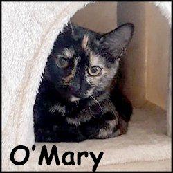 O'Mary