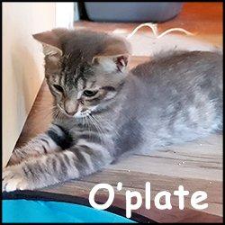 O'plate