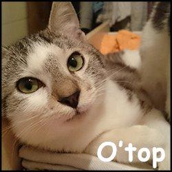 O'Top