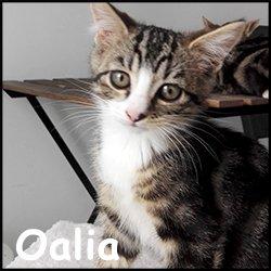 Oalia