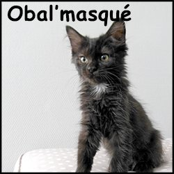Obal'masqué