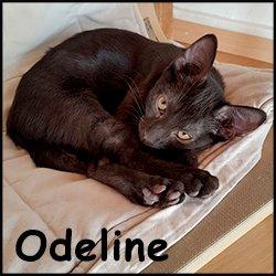 Odeline
