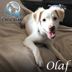 Olaf 3