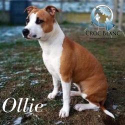 Ollie grde