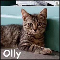 Olly 2
