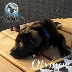 Olympe2