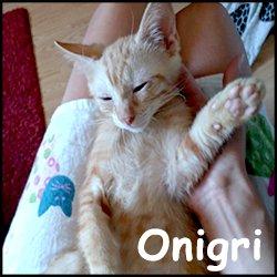 Onigri