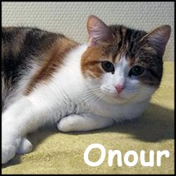 Onour