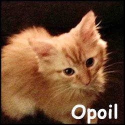 Opoil