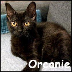 Orcanie