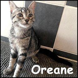 Oreane