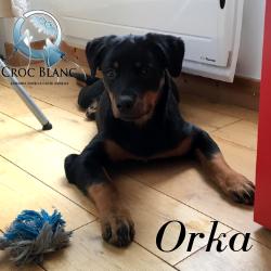 Orka1