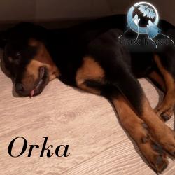 Orka2