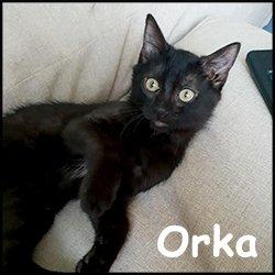 Orka 2