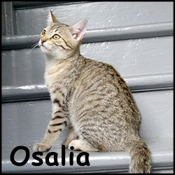 Osalia
