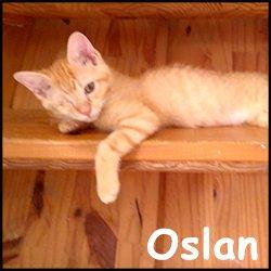 Oslan