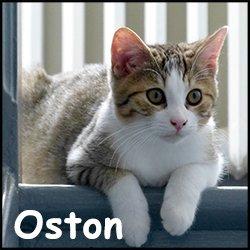 Oston