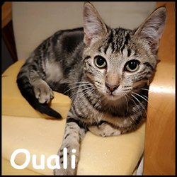 Ouali