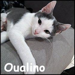 Oualino