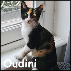 Oudini