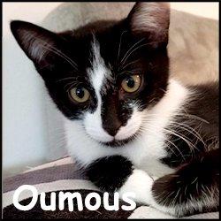 Oumous