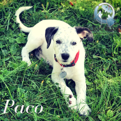 Paco