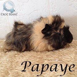 Papaye1