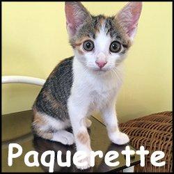 Paquerette