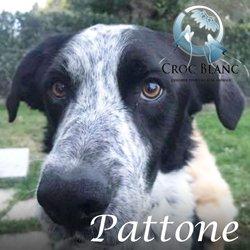 Pattone