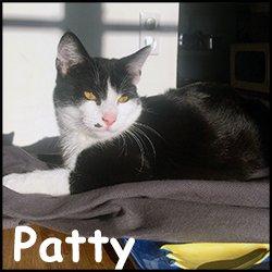 Patty 2