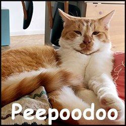 Peepoodoo