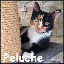 Peluche 2