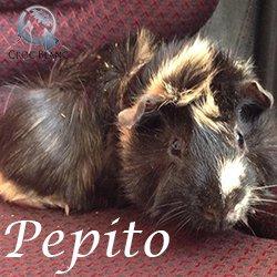 Pepito1