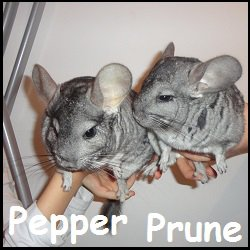 Pepper et Prune
