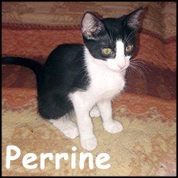 Perrine