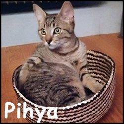 Pihya
