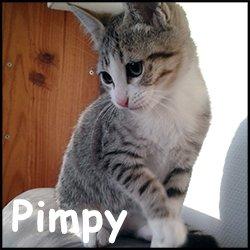 Pimpy