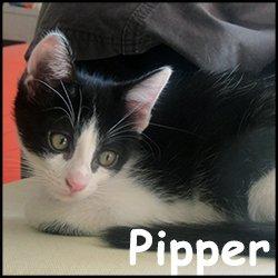 Pipper
