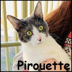 Pirouette2