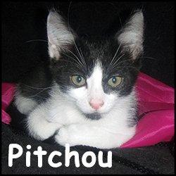 Pitchou