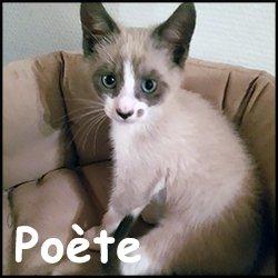 Poete
