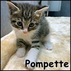 Pompette