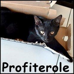 Profiterole
