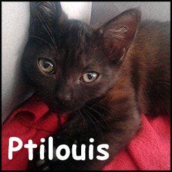 Ptilouis