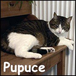 Pupuce