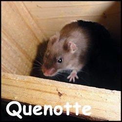Quenotte