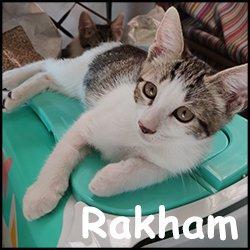 Rakham